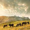 Beautiful Mountain Landscape With Horses In The Foreground Stock Images - 44912094
