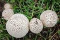 Top View  Of White Mushroom Royalty Free Stock Images - 44946459