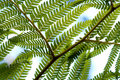 Fern Fronds Stock Photos - 44964433