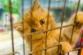 Homeless Animals. Kitten Looking Out From Behind The Bars Of His Royalty Free Stock Images - 44998319