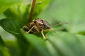 Insects Stock Images - 44999544