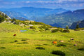 Mountain Meadow  With Cows Stock Photography - 45014042