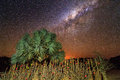 Milky Way Plants Stock Image - 45043911