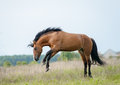 Horse Playing On Freedom Stock Photo - 45048170