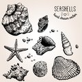Hand Drawn Collection Of Various Seashell Royalty Free Stock Photo - 45097545