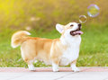 Happy Fun Dog And Soap Bubbles Royalty Free Stock Photos - 45104628