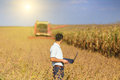 Soybean Harvest Stock Photography - 45128812