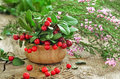 Cowberries And Common Heather Flowers On Rustic Surface Royalty Free Stock Images - 45130589