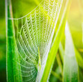 Spider Web Or Cobweb With Water Drops After Rain Stock Photography - 45143532