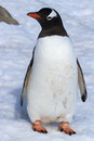Gentoo Penguin Standing On The Snow Near The Stone Stock Photos - 45148413