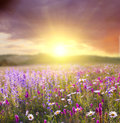 Flower Field Stock Photography - 45172162