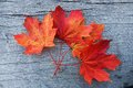 Red Maple Leaf Royalty Free Stock Photography - 45210717