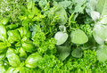 Fresh Herbs Basil, Marjoram, Parsley, Rosemary, Thyme, Sage Royalty Free Stock Photo - 45216835