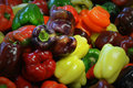 Multi-Colored Bell Peppers Royalty Free Stock Photo - 45244685