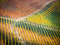 Vineyards In Autumn Stock Photography - 45244782