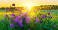 Morning Flowers Royalty Free Stock Photography - 45250777