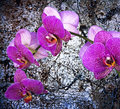 Violet Orchid Royalty Free Stock Photo - 45256025