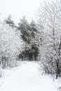 The Christmas Mysterious Winter Snowy Road In Forest Fog, Royalty Free Stock Photo - 45258975