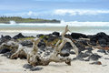 Tortuga Bay, Santa Cruz, Galapagos Royalty Free Stock Photo - 45281975