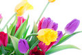 Spring Tulips Isolated On A White Stock Photo - 4534790