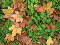 Clover Leaves Royalty Free Stock Images - 4534979