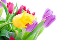 Spring Tulips Isolated On A White Royalty Free Stock Photo - 4535545