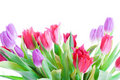 Spring Tulips Isolated On A White Stock Image - 4535621