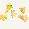 Autumn Background With Leaves Stock Photo - 45307470