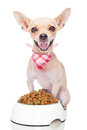Hungry Dog Royalty Free Stock Photography - 45308537