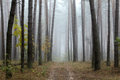 Pine Forest In Autumn Stock Photos - 45332213