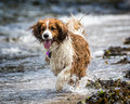 Dog Running And Playing Stock Photos - 45332453