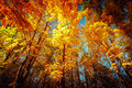Sunny Day In Autumn Park With Colorful Trees Royalty Free Stock Photography - 45337847