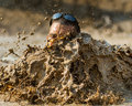 Big Splash In The Mud Royalty Free Stock Photos - 45366908
