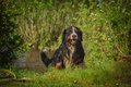 Dog In The Forest Stock Photography - 45399292