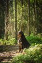 Dog In The Forest Stock Photo - 45399310