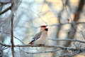 Singing Small Bird In The Cold Winter Royalty Free Stock Images - 45418239