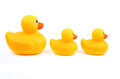 Ducks In A Row Royalty Free Stock Images - 45418969