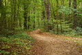 Forest Path Stock Photos - 45457083