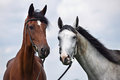 Two Horses Stock Image - 45459531