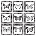 Set Of Butterflies Royalty Free Stock Image - 45462026