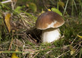 Boletus Edulis Royalty Free Stock Photography - 45465317