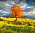 Lonely Autumn Tree Against Dramatic Sky In Mountains Royalty Free Stock Photography - 45475197