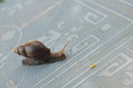 Snail On The Tiles Royalty Free Stock Image - 45505586