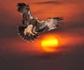 Imperial Eagle Stock Photography - 45538032