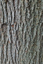 Tree Trunk Close Up Stock Photo - 45539460
