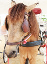 Close Up Face Of Working Horse With Eyes Blind Path Stock Photo - 45584440