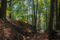 Forest Trail In Dutch Woods During Fall Royalty Free Stock Image - 45592076