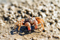 Sand Bubbler Crab Stock Photo - 45597490