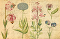 Antique Botanical Wall Art Print Illustration Royalty Free Stock Photo - 45631365