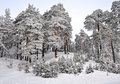 Winter Wonderland In Snow Covered Forest Stock Photos - 45634323
